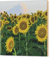Sunflowers In The Clouds Wood Print