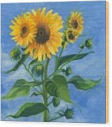 Sunflowers On Bauer Farm Wood Print