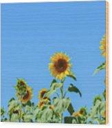 Sunflowers On Blue Wood Print