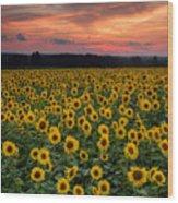 Sunflowers To The Sky Wood Print