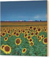 Sunflowers Under A Stormy Sky By Denver Airport Wood Print