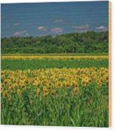 Sunflowers Weldon Spring Mo_dsc9830_16 Wood Print