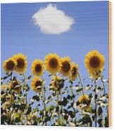 Sunflowers With A Cloud Wood Print