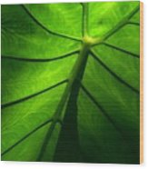 Sunglow Green Leaf Wood Print