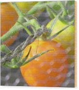 Sungold Tomatoes Wood Print