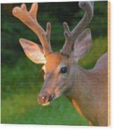 Sunkissed Buck Wood Print