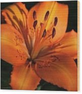 Sunkissed Lily Wood Print