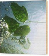 Sunleaf No. 3 Wood Print