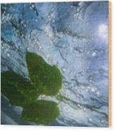 Sunleaf No.2 Wood Print