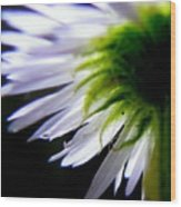 Sunlight And Daisies Wood Print