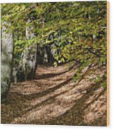 Sunlight And Shadow Wood Print