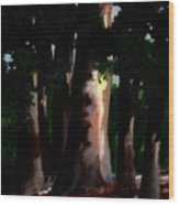 Sunlight And Shadows - Eucalyptus Majesties Wood Print