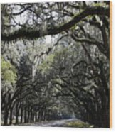 Sunlight And Shadows On Live Oaks Wood Print