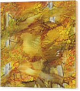 Sunlight Dancing In The Aspen Forest Wood Print