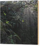 Sunlight Falling Into Glen With Bright Leaves, Vertical Wood Print