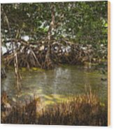 Sunlight In Mangrove Forest Wood Print