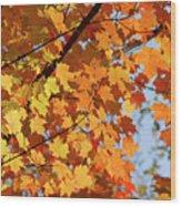 Sunlight In Maple Tree Wood Print