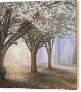 Sunlight In The Meadow Wood Print