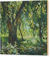 Sunlight Into The Willow Trees Wood Print