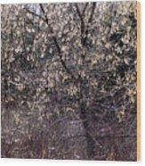 Sunlight Magic Wood Print