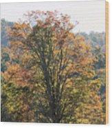Sunlight On Autumn Foliage Wood Print