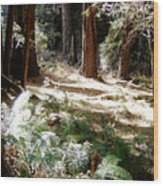 Sunlight On Path Wood Print