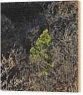 Sunlight On Pine Wood Print