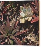 Sunlight On Succulents Wood Print