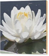 Sunlight On Water Lily Wood Print