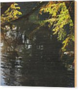 Sunlight Reflections Wood Print