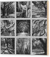 Sunlight Through Live Oaks Collage Wood Print