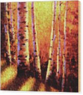 Sunlight Through The Aspens Wood Print