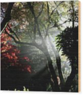 Sunlight Through The Tree In Misty Morning 1. Wood Print