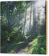 Sunlight Through Trees, Ecola State Wood Print