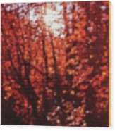 Sunlight Thru Autumn Leaves Abstract Wood Print