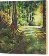 Sunlight Trial Port Moody Wood Print