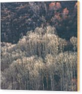 Sunlit Bare Autumn Aspens 1 Wood Print