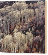 Sunlit Bare Autumn Aspens 2 Wood Print