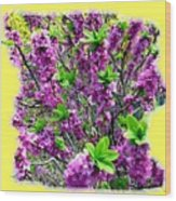 Sunlit Daphne Wood Print