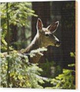 Sunlit Deer Friend Wood Print