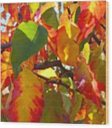 Sunlit Fall Leaves Wood Print