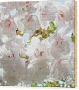 Sunlit Flowers Art Prints White Tree Blossoms Baslee Troutman Wood Print