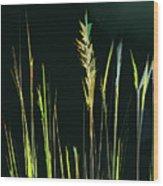 Sunlit Grasses Wood Print