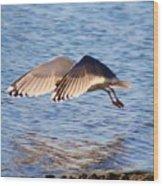 Sunlit Gull Wings Wood Print