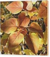Sunlit Lilac Leaves Wood Print
