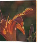 Sunlit Lilly Wood Print
