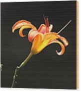 Sunlit Lily Stretching Wood Print