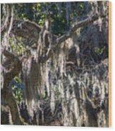 Sunlit Moss Wood Print
