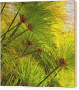 Sunlit Paparus Wood Print