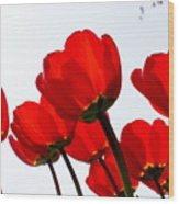 Sunlit Petals Wood Print